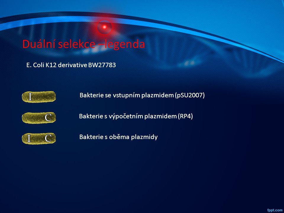Duální selekce –legenda Bakterie se vstupním plazmidem (pSU2007) Bakterie s výpočetním plazmidem (RP4) Bakterie s oběma plazmidy E. Coli K12 derivativ