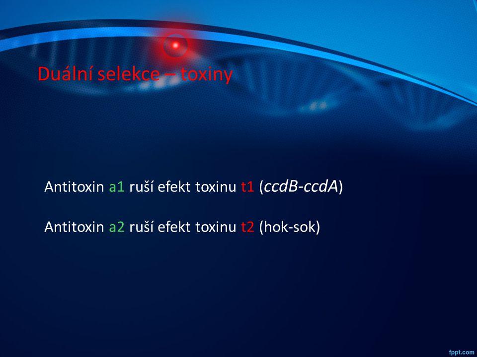 Duální selekce – toxiny Antitoxin a1 ruší efekt toxinu t1 ( ccdB-ccdA ) Antitoxin a2 ruší efekt toxinu t2 (hok-sok)
