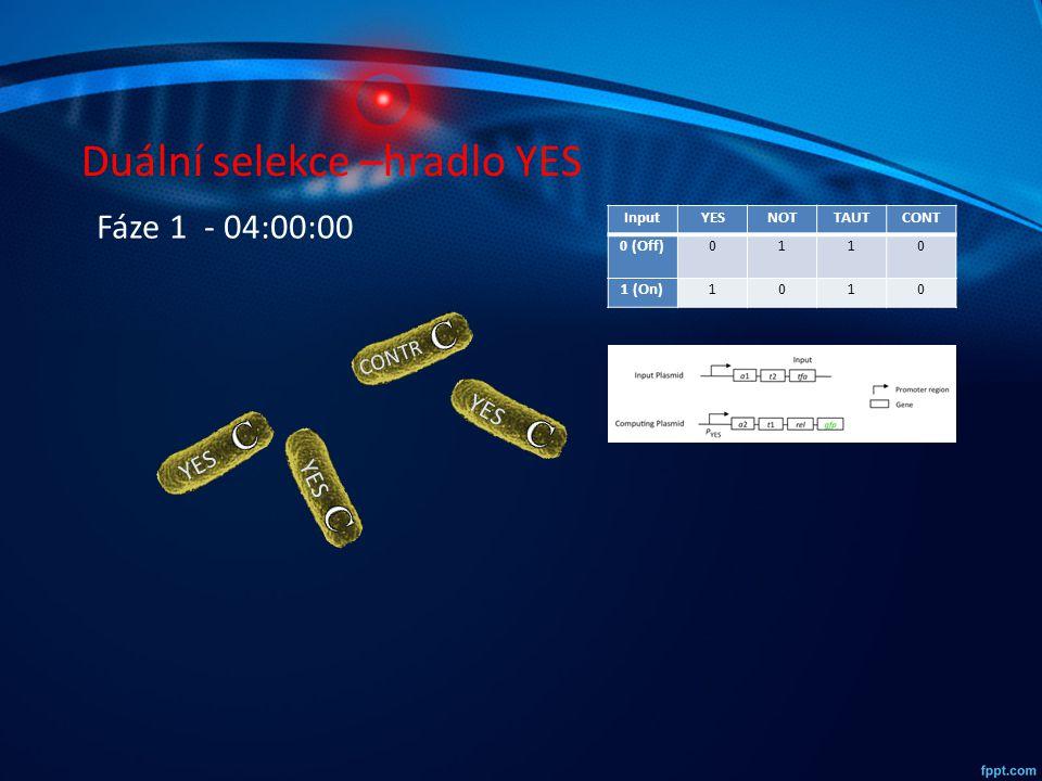 Duální selekce –hradlo YES InputYESNOTTAUTCONT 0 (Off)0110 1 (On)1010 YES CONTR YES Fáze 1 - 04:00:00