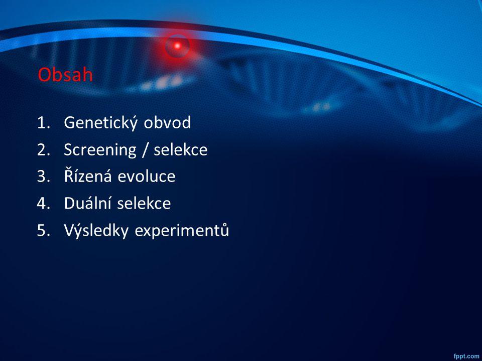 Obsah 1.Genetický obvod 2.Screening / selekce 3.Řízená evoluce 4.Duální selekce 5.Výsledky experimentů