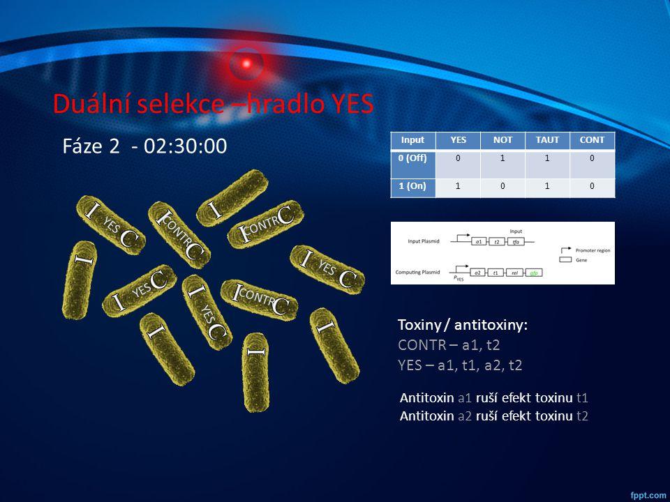 Duální selekce –hradlo YES InputYESNOTTAUTCONT 0 (Off)0110 1 (On)1010 YES CONTR YES CONTR YES CONTR Fáze 2 - 02:30:00 Toxiny / antitoxiny: CONTR – a1,