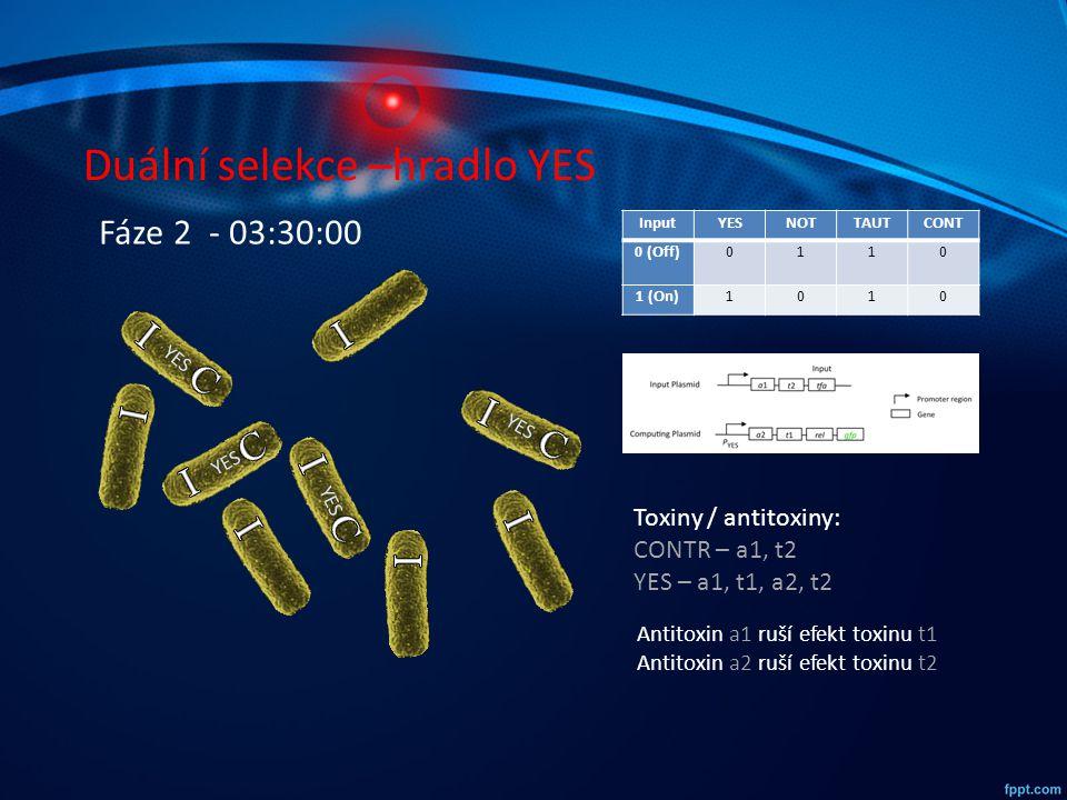 Duální selekce –hradlo YES InputYESNOTTAUTCONT 0 (Off)0110 1 (On)1010 YES Fáze 2 - 03:30:00 Toxiny / antitoxiny: CONTR – a1, t2 YES – a1, t1, a2, t2 A