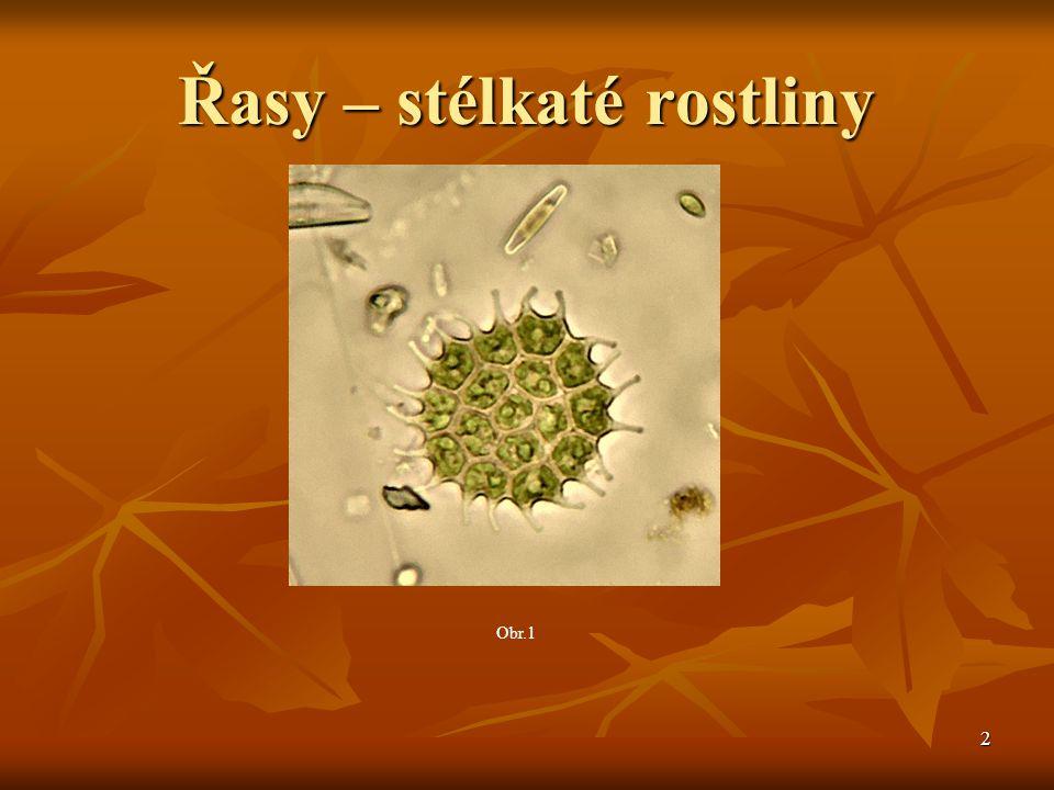 patří mezi vývojově nejstarší skupiny patří mezi vývojově nejstarší skupiny organismů na Zemi, které začaly do organismů na Zemi, které začaly do prostředí uvolňovat kyslík prostředí uvolňovat kyslík tělo tvořeno stélkou tělo tvořeno stélkou součástí planktonu součástí planktonu Jednobuněčné Jednobuněčné Kolonie Kolonie Mnohobuněčné – zelené, hnědé, červené Mnohobuněčné – zelené, hnědé, červené 3