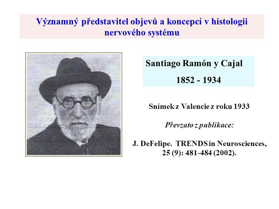 Santiago Ramón y Cajal 1852 - 1934 Snímek z Valencie z roku 1933 Převzato z publikace: J.