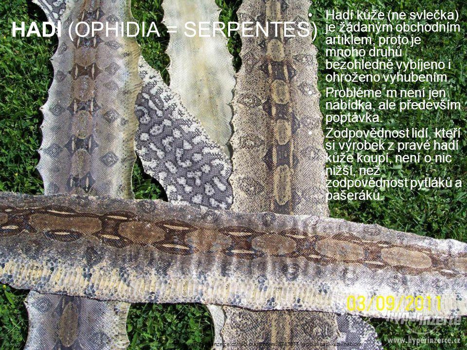 HADI (OPHIDIA = SERPENTES) Hadí kůže (ne svlečka) je žádaným obchodním artiklem, proto je mnoho druhů bezohledně vybíjeno i ohroženo vyhubením. Problé