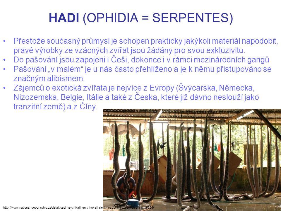 HADI (OPHIDIA = SERPENTES) Přestože současný průmysl je schopen prakticky jakýkoli materiál napodobit, pravé výrobky ze vzácných zvířat jsou žádány pr