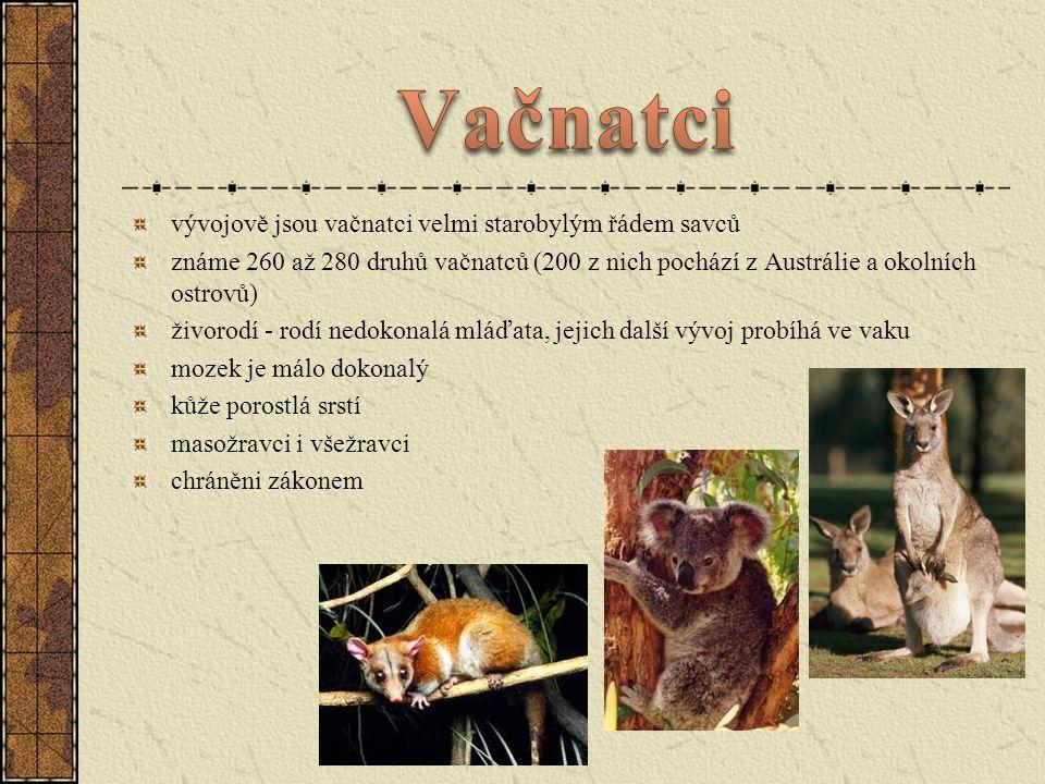 vývojově jsou vačnatci velmi starobylým řádem savců známe 260 až 280 druhů vačnatců (200 z nich pochází z Austrálie a okolních ostrovů) živorodí - rod