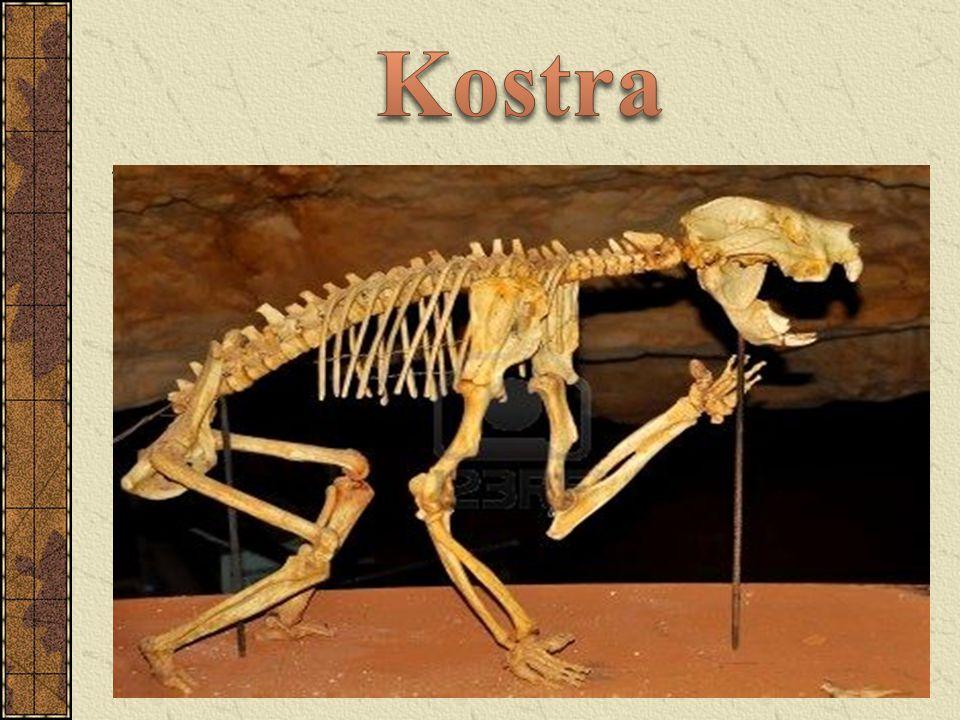 nejrozšířenějším klokanem sušších oblastí žije ve stádech největší z vačnatců délka těla až 120 cm a hmotnost až 100 kg mohutné a svalnaté zadní nohy, přední zakrnělé, a silný ocas dokáže běžet 50 až 70 km za hod, skoky až 13,5 m živí se rostlinami (býložravec) samice má na břiše vak, kde probíhá vývoj potomka, přiroste k bradavce mládě klokana obrovského měří po narození pouhé 2 cm mládě opouští vak asi po 11 měsících, mateřské mléko však sají až do věku 18 měsíců
