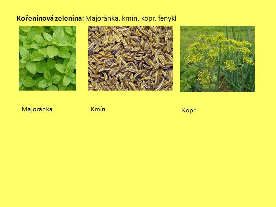 Kořeninová zelenina: Majoránka, kmín, kopr, fenykl MajoránkaKmín Kopr