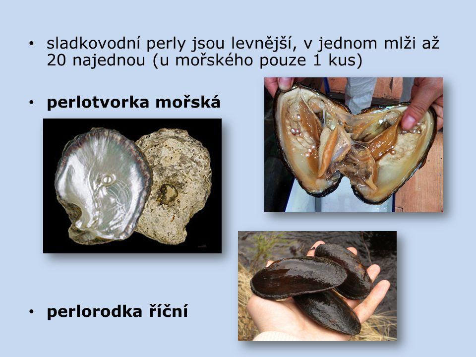sladkovodní perly jsou levnější, v jednom mlži až 20 najednou (u mořského pouze 1 kus) perlotvorka mořská perlorodka říční