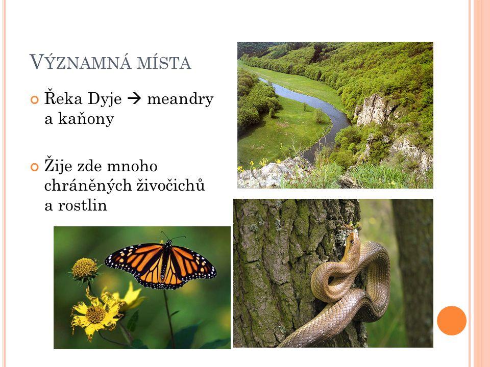 V ÝZNAMNÁ MÍSTA Řeka Dyje  meandry a kaňony Žije zde mnoho chráněných živočichů a rostlin