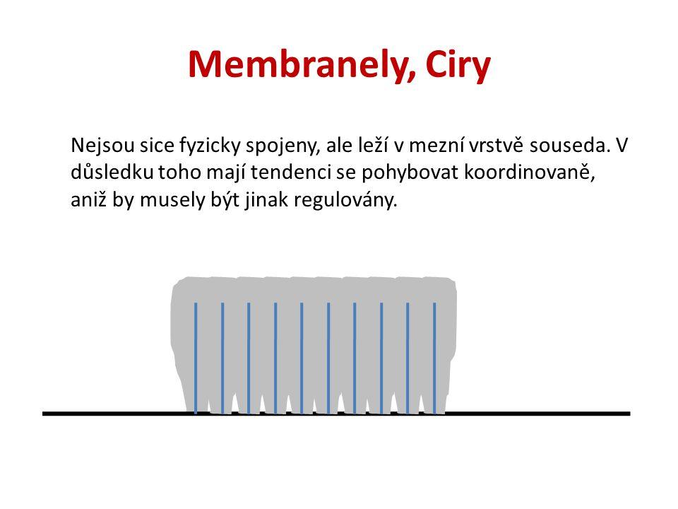 Membranely, Ciry Nejsou sice fyzicky spojeny, ale leží v mezní vrstvě souseda. V důsledku toho mají tendenci se pohybovat koordinovaně, aniž by musely