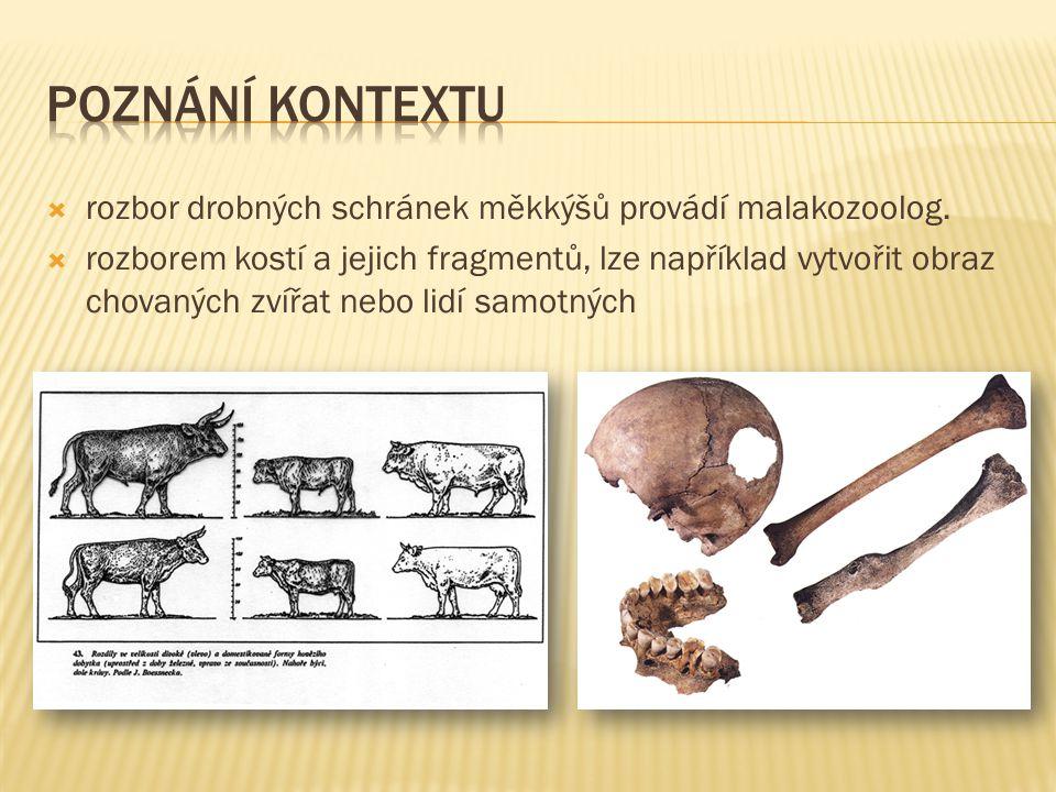  rozbor drobných schránek měkkýšů provádí malakozoolog.  rozborem kostí a jejich fragmentů, lze například vytvořit obraz chovaných zvířat nebo lidí