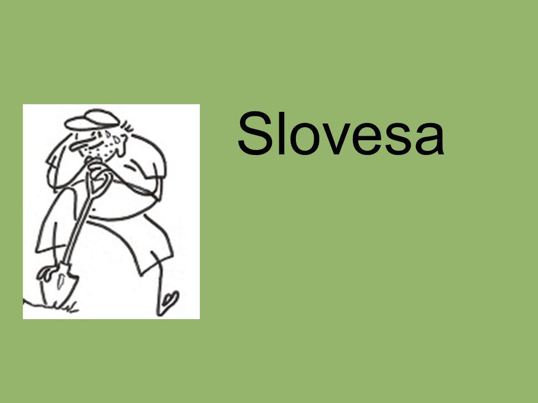 Vyjadřují děj, činnost, proces, stav a změny stavu Tvoří základ české věty Jsou ohebným slovním druhem - časují se