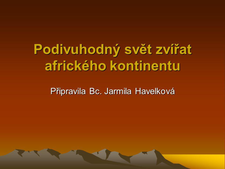 Podivuhodný svět zvířat afrického kontinentu Připravila Bc. Jarmila Havelková