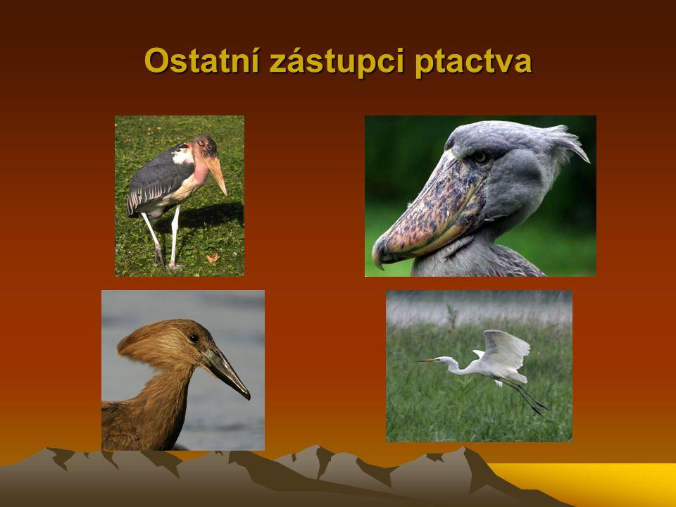Ostatní zástupci ptactva