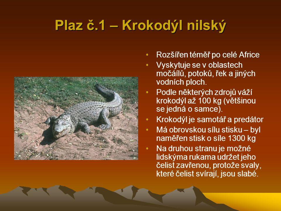 Plaz č.1 – Krokodýl nilský Rozšířen téměř po celé Africe Vyskytuje se v oblastech močáílů, potoků, řek a jiných vodních ploch. Podle některých zdrojů