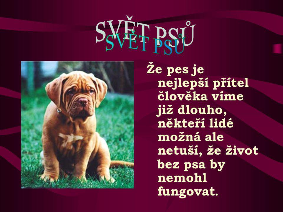 Foto ze stránek: www.cz-pes.czwww.cz-pes.cz www.p-e-s.blog.cz www.čokl.cz Ivana Zikmundová dne 2.6.2008