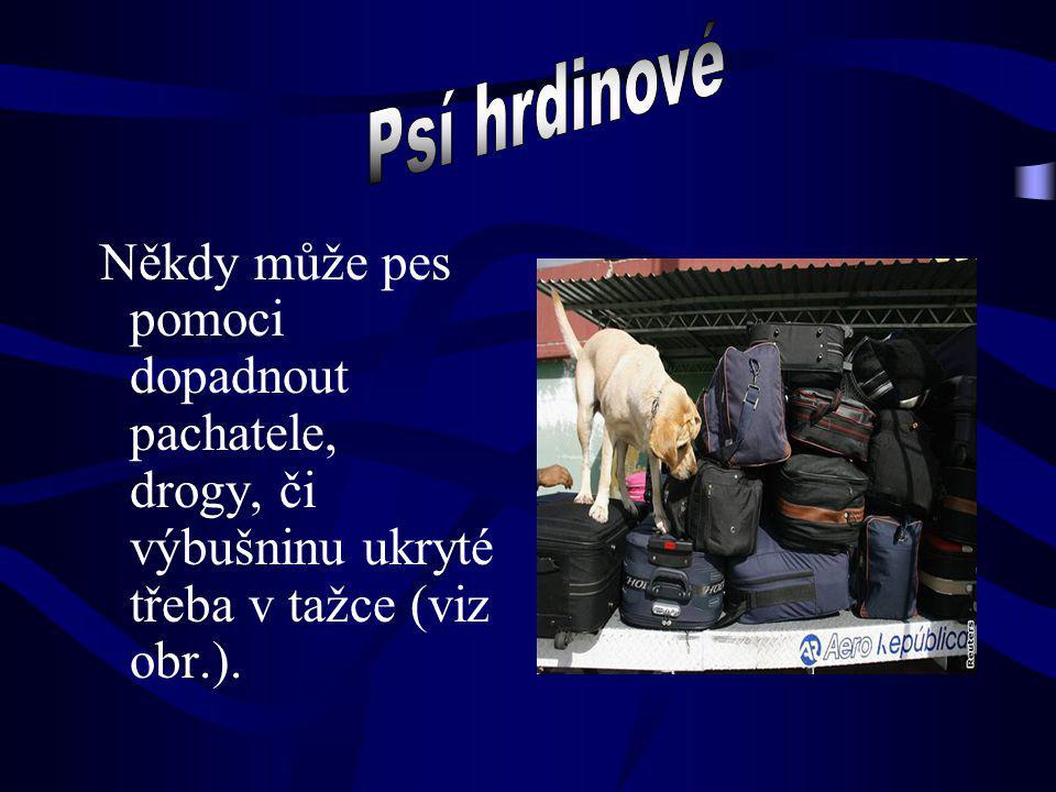 Někdy může pes pomoci dopadnout pachatele, drogy, či výbušninu ukryté třeba v tažce (viz obr.).