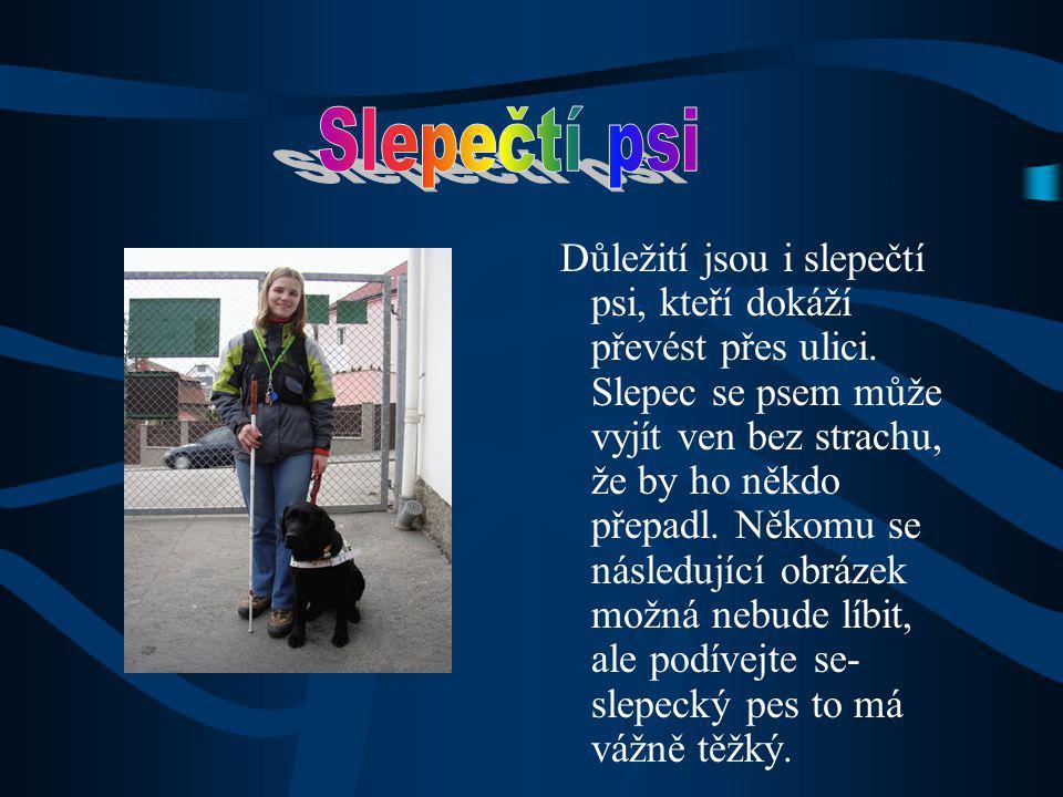 Důležití jsou i slepečtí psi, kteří dokáží převést přes ulici.