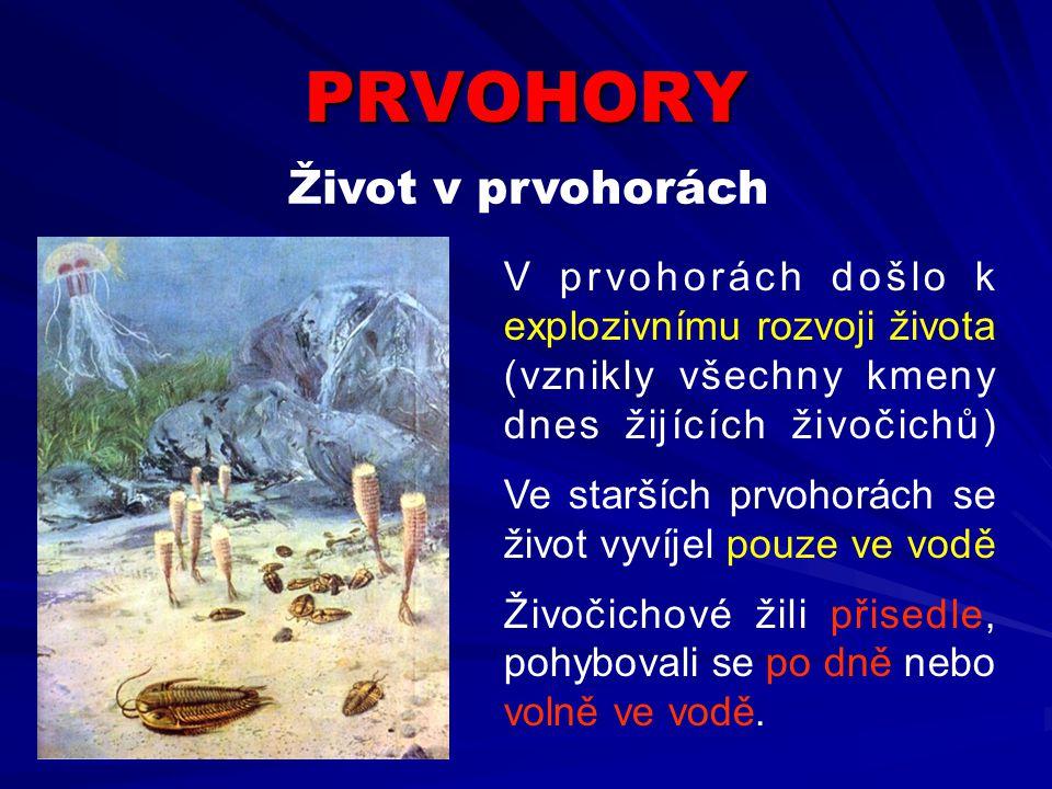 PRVOHORY Život v prvohorách V prvohorách došlo k explozivnímu rozvoji života (vznikly všechny kmeny dnes žijících živočichů) Ve starších prvohorách se