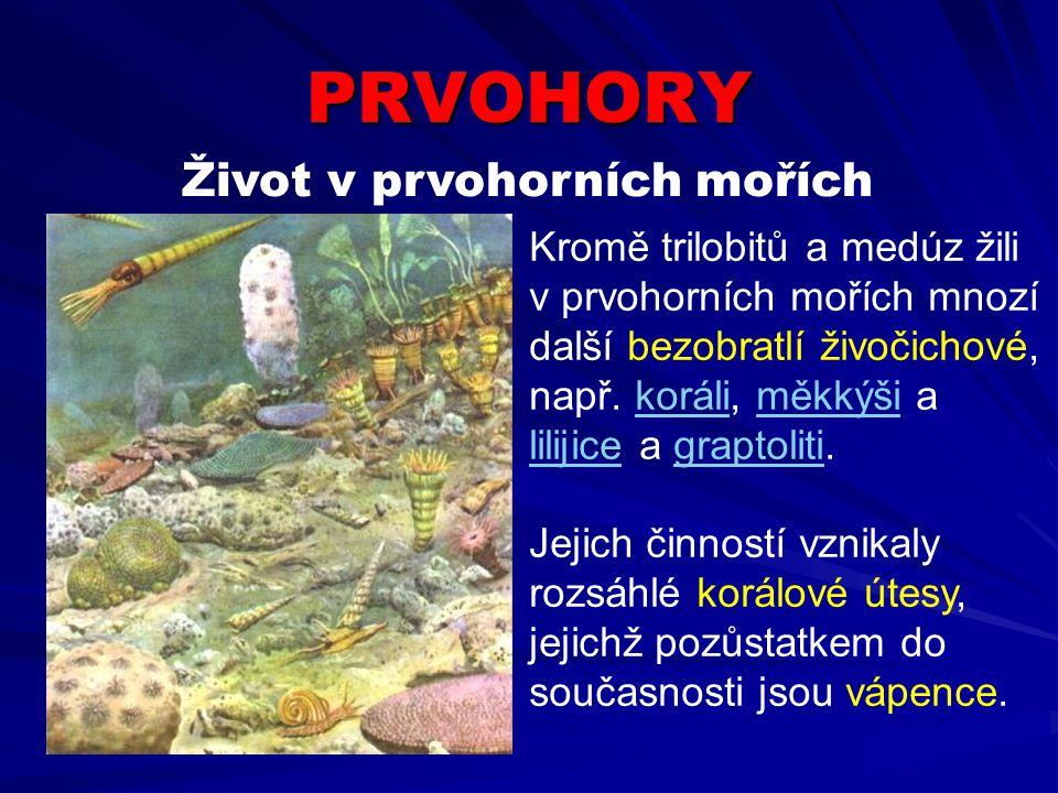 PRVOHORY Život v prvohorních mořích Kromě trilobitů a medúz žili v prvohorních mořích mnozí další bezobratlí živočichové, např. koráli, měkkýši a lili