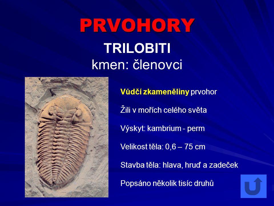 PRVOHORY TRILOBITI kmen: členovci Vůdčí zkameněliny prvohor Žili v mořích celého světa Výskyt: kambrium - perm Velikost těla: 0,6 – 75 cm Stavba těla: