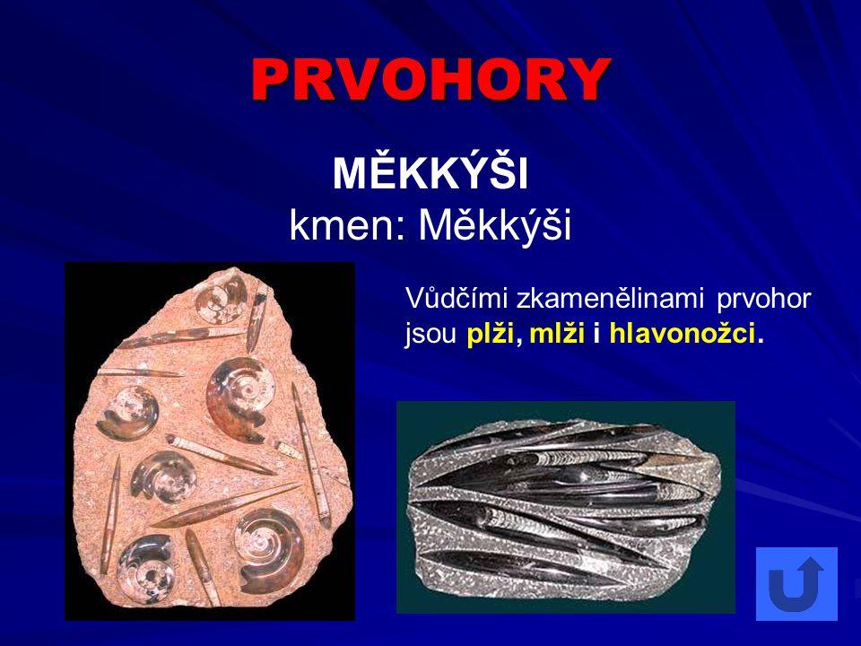 PRVOHORY MĚKKÝŠI kmen: Měkkýši Vůdčími zkamenělinami prvohor jsou plži, mlži i hlavonožci.