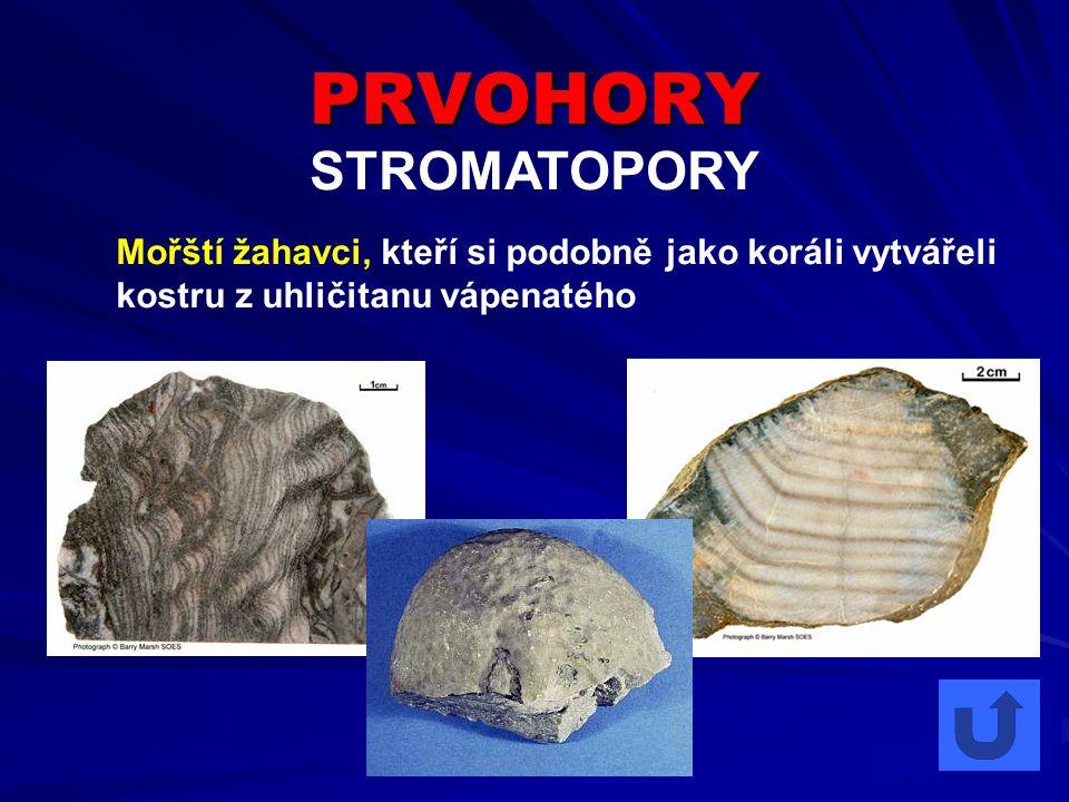 PRVOHORY STROMATOPORY Mořští žahavci, kteří si podobně jako koráli vytvářeli kostru z uhličitanu vápenatého