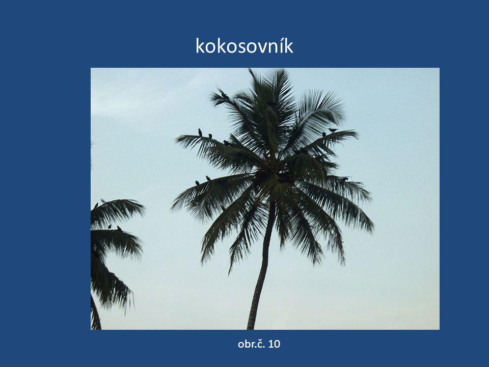 kokosovník obr.č. 10