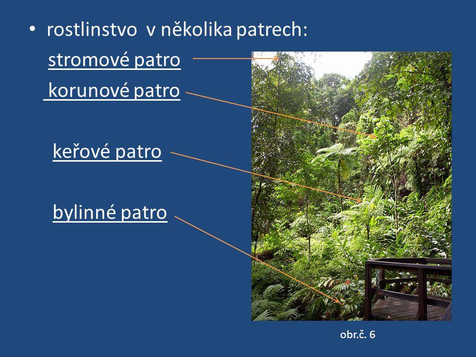 rostlinstvo v několika patrech: stromové patro korunové patro keřové patro bylinné patro obr.č. 6
