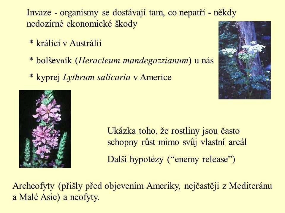 Invaze - organismy se dostávají tam, co nepatří - někdy nedozírné ekonomické škody * králíci v Austrálii * bolšev n ík (Heracleum mandegazzianum) u nás * kyprej Lythrum salicaria v Americe Ukázka toho, že rostliny jsou často schopny růst mimo svůj vlastní areál Další hypotézy ( enemy release ) Archeofyty (přišly před objevením Ameriky, nejčastěji z Mediteránu a Malé Asie) a neofyty.