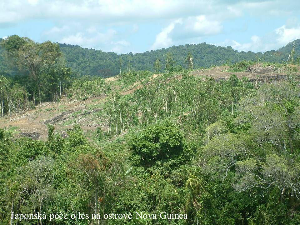 Japonská péče o les na ostrově Nová Guinea