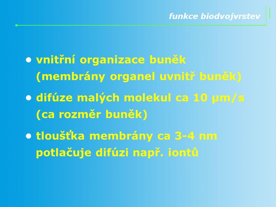 funkce biodvojvrstev vnitřní organizace buněk (membrány organel uvnitř buněk) difúze malých molekul ca 10 μm/s (ca rozměr buněk) tloušťka membrány ca