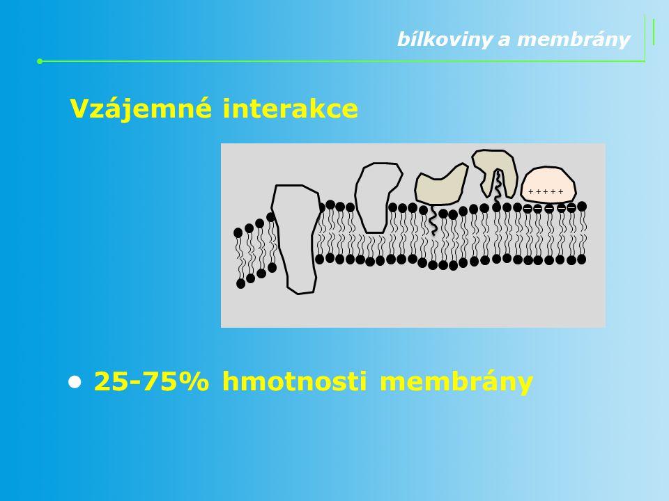bílkoviny a membrány 25-75% hmotnosti membrány + + + + + Vzájemné interakce