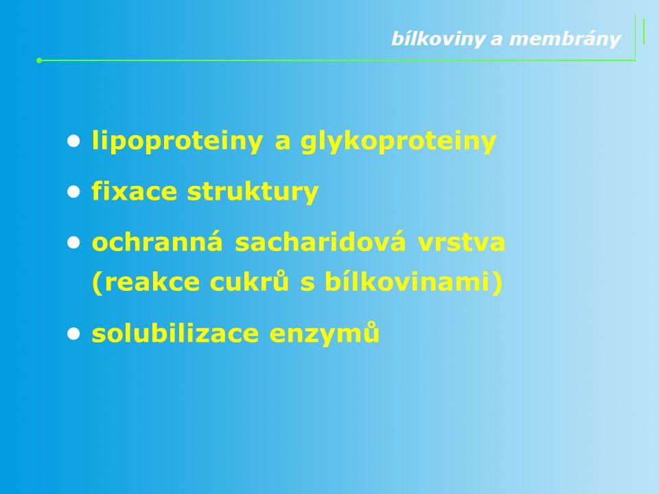 bílkoviny a membrány lipoproteiny a glykoproteiny fixace struktury ochranná sacharidová vrstva (reakce cukrů s bílkovinami) solubilizace enzymů