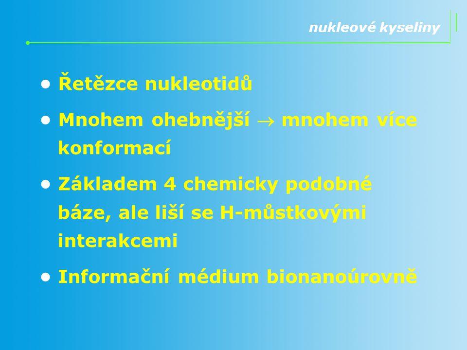 Řetězce nukleotidů Mnohem ohebnější  mnohem více konformací Základem 4 chemicky podobné báze, ale liší se H-můstkovými interakcemi Informační médium