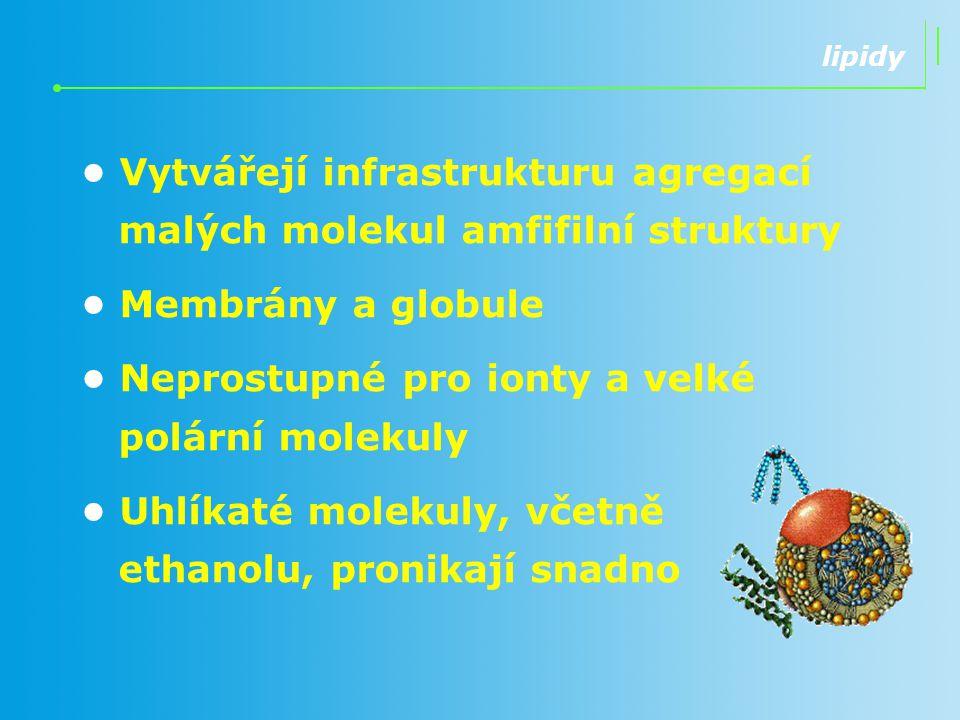 Vytvářejí infrastrukturu agregací malých molekul amfifilní struktury Membrány a globule Neprostupné pro ionty a velké polární molekuly Uhlíkaté moleku