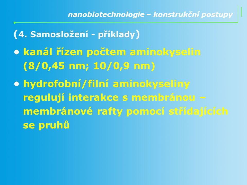 ( 4. Samosložení - příklady ) kanál řízen počtem aminokyselin (8/0,45 nm; 10/0,9 nm) hydrofobní/filní aminokyseliny regulují interakce s membránou – m