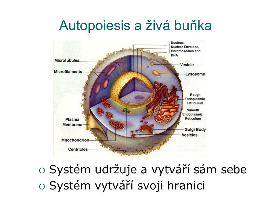Autopoiesis a živá buňka  Systém udržuje a vytváří sám sebe  Systém vytváří svoji hranici