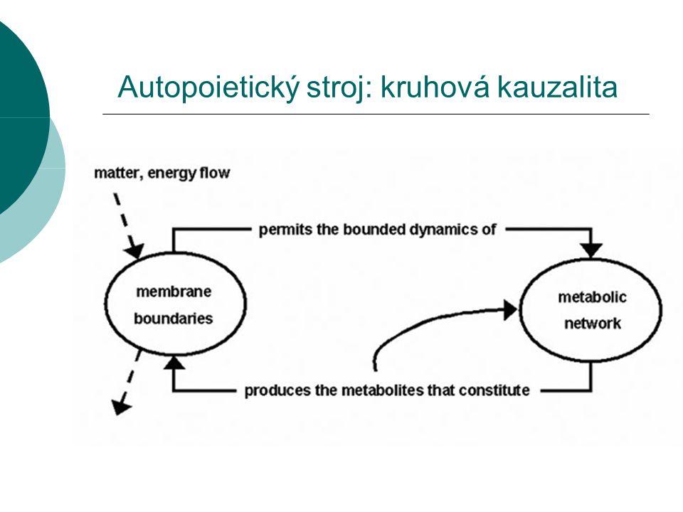 Autopoietický stroj: kruhová kauzalita
