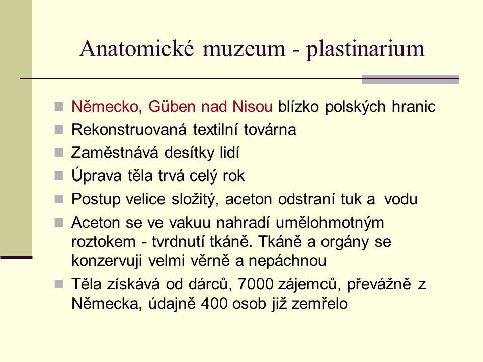 Anatomické muzeum - plastinarium Německo, Güben nad Nisou blízko polských hranic Rekonstruovaná textilní továrna Zaměstnává desítky lidí Úprava těla t