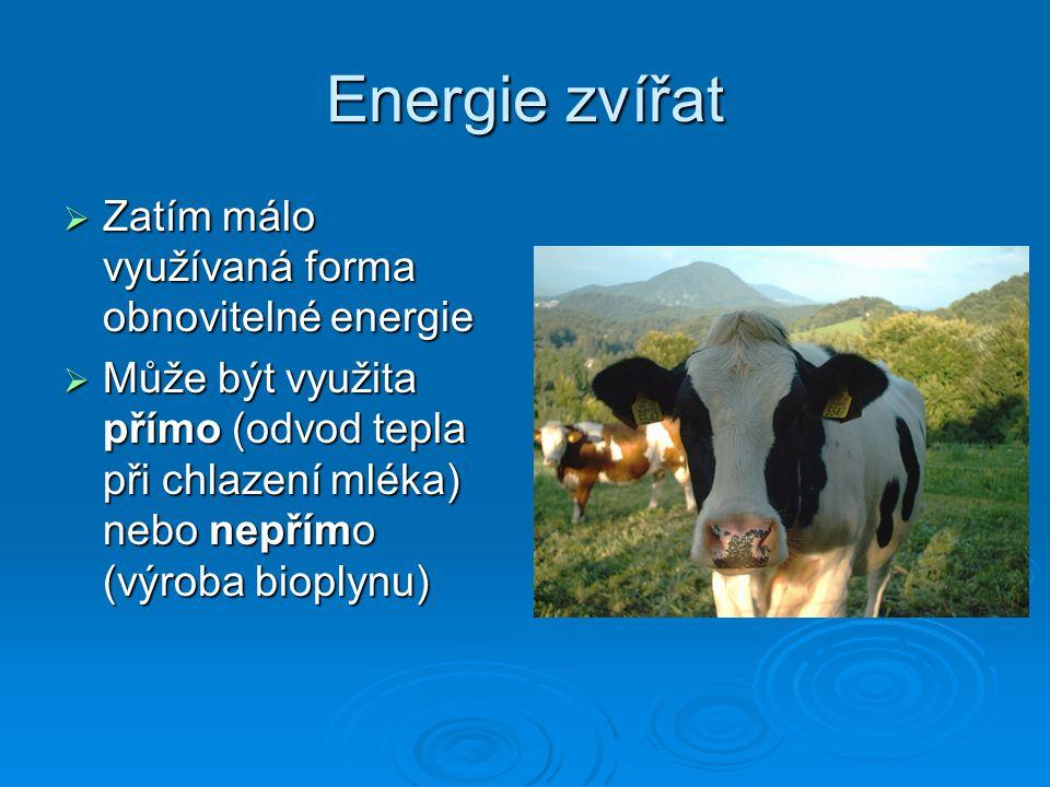 Energie biomasy  Je možné využívat přímým spalováním dřevní hmoty nebo výrobou paliv z produktů rostlin (oleje, estery, alkoholy)  Z biologické hmoty lze též vyrobit vodík – palivo budoucnosti  Energie rostlin se zdá být vhodnou alternativou pro rozvojové země