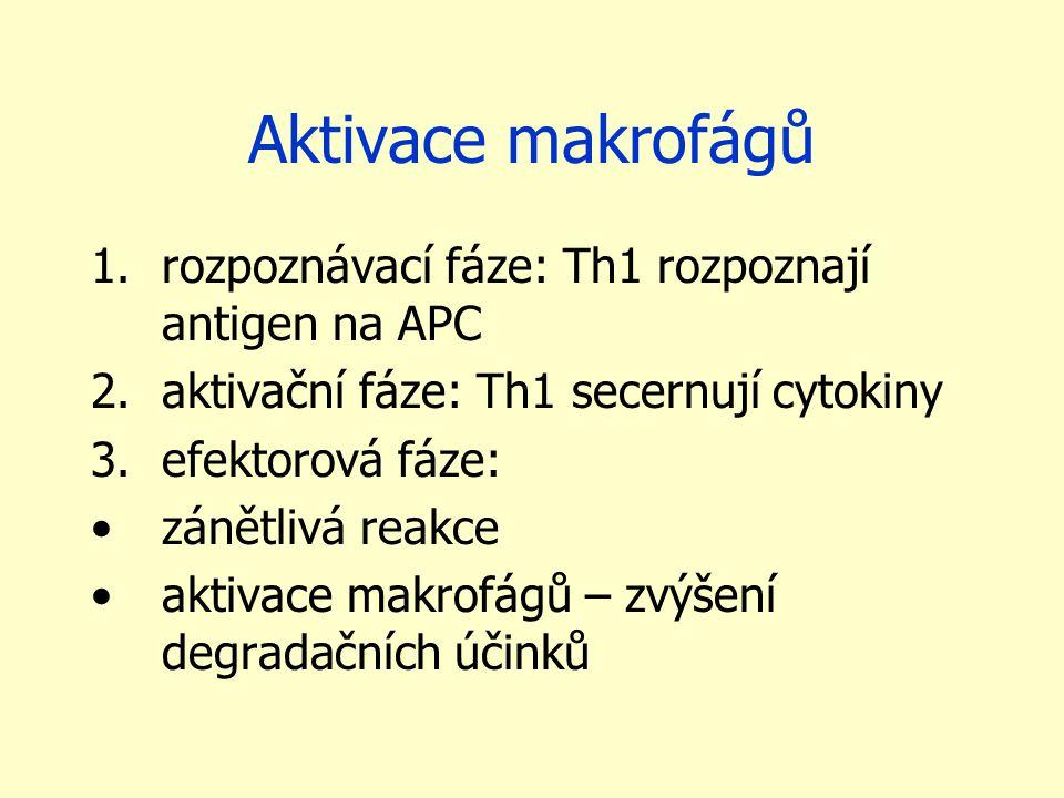 Aktivace makrofágů 1.rozpoznávací fáze: Th1 rozpoznají antigen na APC 2.aktivační fáze: Th1 secernují cytokiny 3.efektorová fáze: zánětlivá reakce aktivace makrofágů – zvýšení degradačních účinků