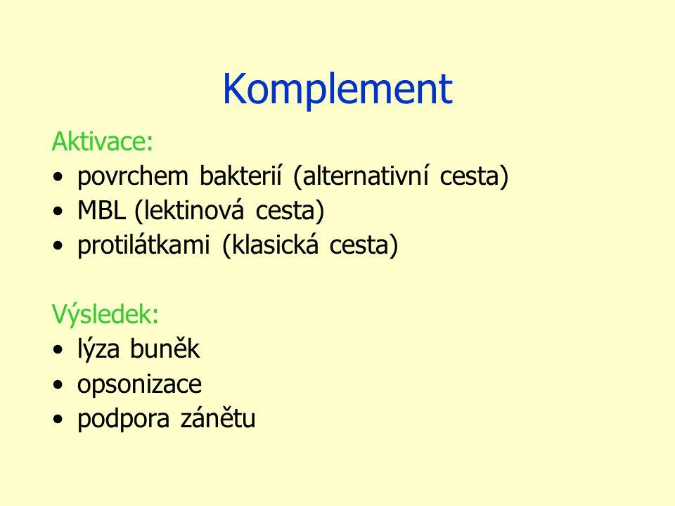 Komplement Aktivace: povrchem bakterií (alternativní cesta) MBL (lektinová cesta) protilátkami (klasická cesta) Výsledek: lýza buněk opsonizace podpora zánětu
