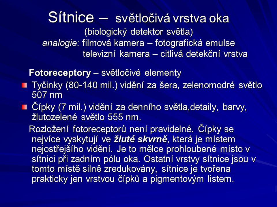 Sítnice – světločivá vrstva oka (biologický detektor světla) analogie: filmová kamera – fotografická emulse televizní kamera – citlivá detekční vrstva