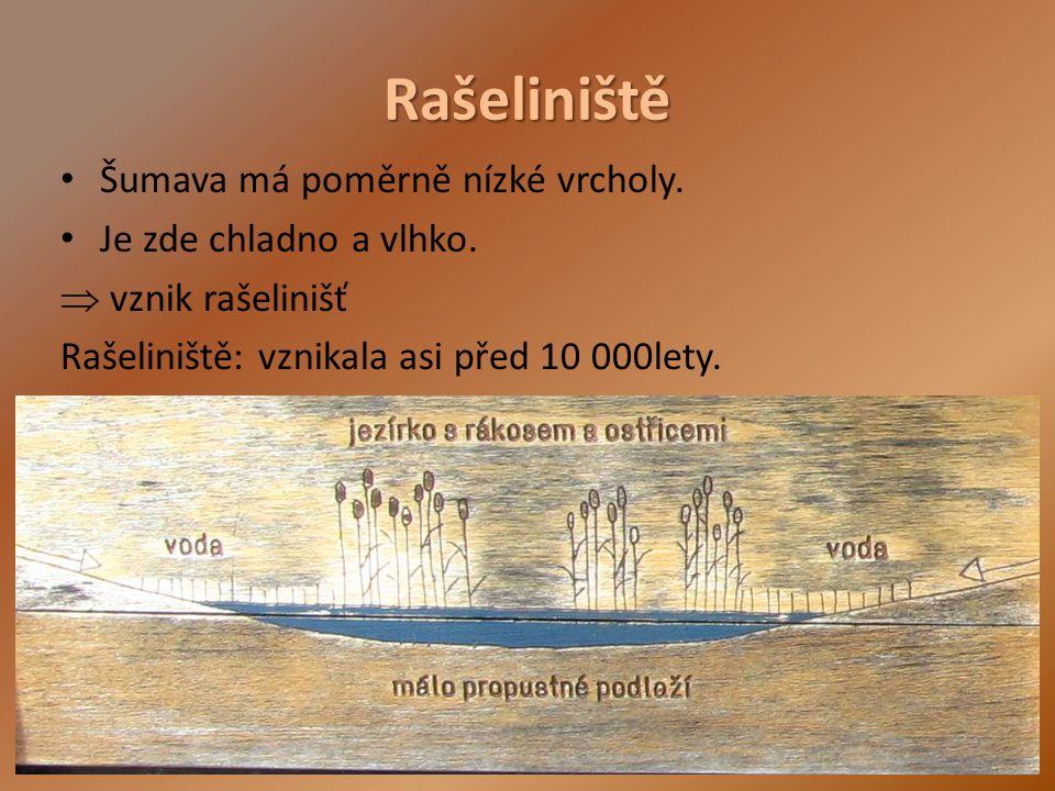 Rašeliniště Šumava má poměrně nízké vrcholy. Je zde chladno a vlhko.  vznik rašelinišť Rašeliniště: vznikala asi před 10 000lety.