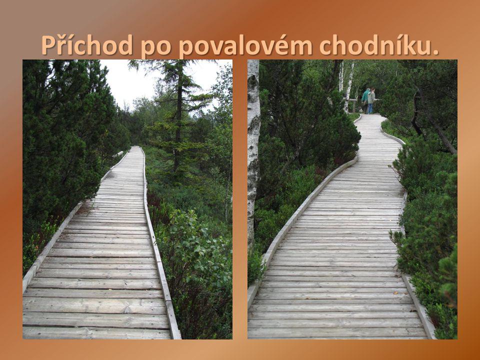 Třeboňská pánev Rybníky: Rožmberk (největší rybník ve střední Evropě) Svět Bezdrev Hejtman, a další