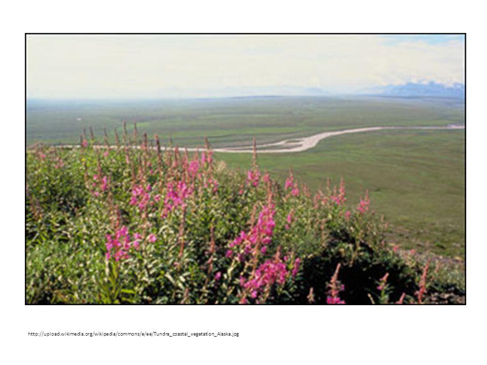 http://upload.wikimedia.org/wikipedia/commons/e/ee/Tundra_coastal_vegetation_Alaska.jpg