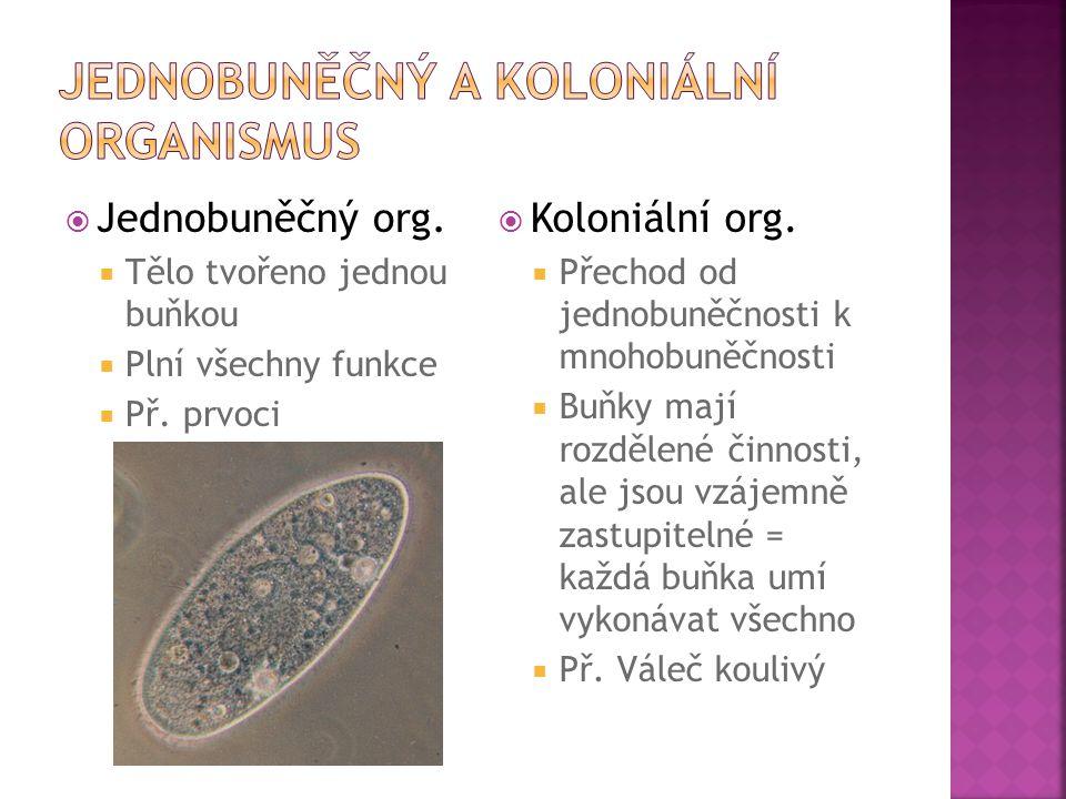  Jednobuněčný org.  Tělo tvořeno jednou buňkou  Plní všechny funkce  Př. prvoci  Koloniální org.  Přechod od jednobuněčnosti k mnohobuněčnosti 